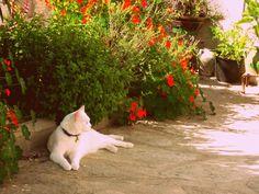 #cat #morfeo #cute