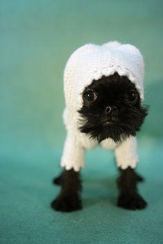 Cutest little puppy in a onesie