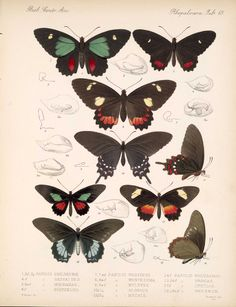 Butterflies and Moths,  Image number:bca_14_03_00_076