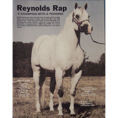 Reynolds Rap - AQHA registered Quarter Horse stallion.  Died on July 4, 1989.   I have been a fan of this horse for several years now.  <3  www.BallardFarms.com