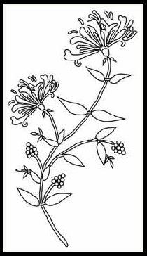 free digital stamps | flora Honeysuckle