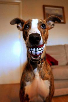 Uśmiech dnia - Smile of a Day