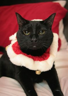 Christmas black cat
