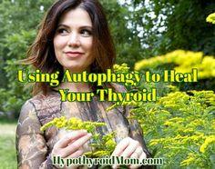 Using Autophagy to Heal Your Thyroid HypothyroidMom.com #thyroid #autoimmune #hashimotos
