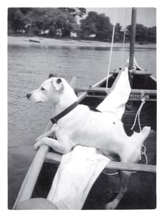 Sailor Jack.