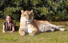 Guinness Book Kitties