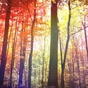 Sunrise Forest Art Print by Kevin Russ | Society6