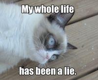 Grumpy Cat understands Loki