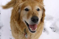 Parents Name: Kathleen Poulos Pets Name: Dallas Pet Species: Dog Pets Favorite thing to do: Making snow angels Eulogy: 3 years ago today my beautiful girl passed over the rainbow bridge. That was a...