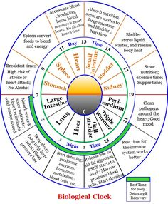 135 Best Body Clock Images In 2020 Body Clock Chinese Medicine