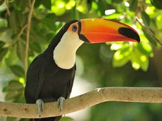 Recientemente, unos biólogos encontraron que es posible que esta parte del ave tenga otras funciones en ciertas especies. Foto: Photos.com