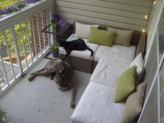 http://www.kittyfence.com/Cat-Fence_VA.jpg