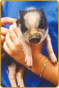 Tanglewood Farm In Canton GA Miniature Animals
