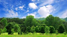Enterprise 50 Million Tree Pledge - Saying Thank You