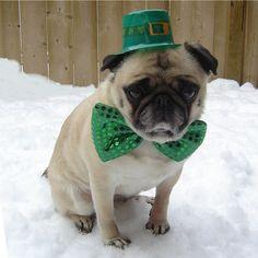 St. Patrick Day Pug