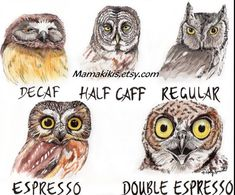 Check out this item in my Etsy shop https://www.etsy.com/listing/226976059/coffee-shop-owl-fine-art-print