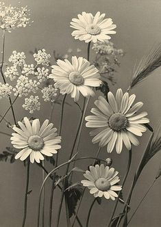 Max Baur 'Marguerite and Meadow Flowers' 1925
