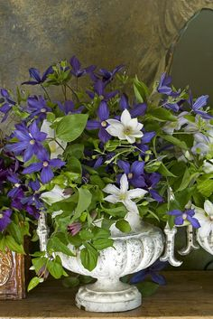 Clematis arrangement