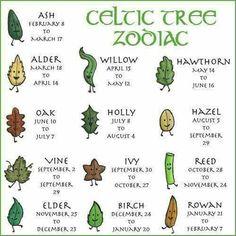 Tree wand