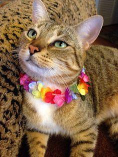 Aloha Pria!