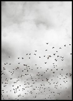 Poster mit Fotokunst, Vögel und Wolken