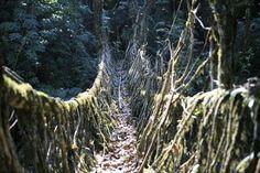 Waldbrücken