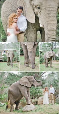 zoo wedding ideas