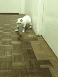 kitty boots (GIF - click twice for animation)