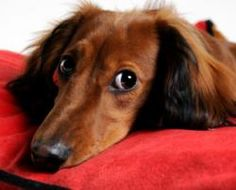 What Is Your Dog Trying To Tell You? There's that 'side-eye' look they give, so cute!