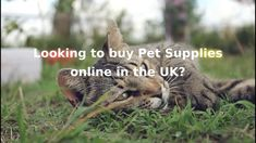 Buy Pets, Online Pet Supplies, Looking To Buy, About Uk, Ecommerce, Online Shopping, Cats, Animals, Gatos