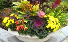 Looking for garden ideas for your fall décor? Check out our gallery; it contains 20 amazing fall container garden ideas that you will quickly fall in love with. Fall Container Plants, Fall Containers, Container Gardening, Gardening Tips, Fall Flowers, Summer Flowers, Tropical Flowers, Garden Diy On A Budget, Garden Ideas