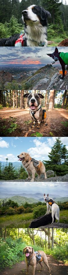 Hiking with your dog is one of the most wonderful adventures you can share together!