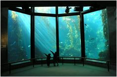 I can come here over and over again - Monterey Aquarium, California
