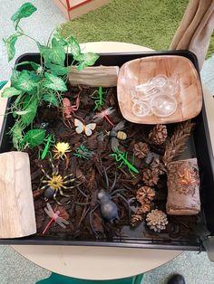 Nature world eyfs Eyfs Activities, Nursery Activities, Outdoor Activities For Kids, Outdoor Learning, Preschool Activities, Minibeasts Eyfs, Investigation Area, Curiosity Approach, Tuff Tray