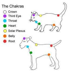 You learn something new every day! Now I know where cats' and dogs' chakras are located!