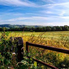 South Downs bike ride.. #farmersfield #crops #gate #colour #nature #southeast #england #sussex #agriculture #bikeride #contrast #southdowns #nationaltrust #beautyspot