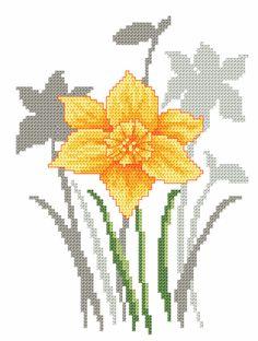 Primavera fiori - narciso