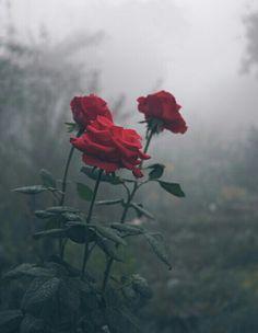 secret--gardens