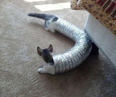 Ein Kätzchen Wurmloch!