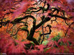 世界中の美しい光景が圧巻のクオリティ、ナショナルジオグラフィック「Traveler Photo Contest 2012」写真集 - GIGAZINE