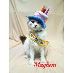 Mayhem B-day