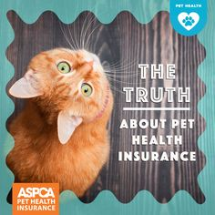 What's the truth about pet health insurance? What is pet insurance exactly? And is pet insurance worth it? Get help answering these questions about pet insurance so you can make a smart decision about whether it's right for you and your pet. Pet Health Insurance, Best Pet Insurance, Looney Tunes Cartoons, Healthy Pets, Dog Care, Puppy Love, Best Dogs, Kitty, Cats