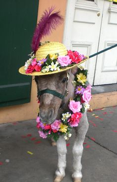 Mark my words, I WILL own at least one miniature horse one day! I will dress it up in a hat and wreath of roses. Farm Animals, Animals And Pets, Funny Animals, Cute Animals, Beautiful Horses, Animals Beautiful, Horse Halloween Costumes, Mini Pony, Pony Party