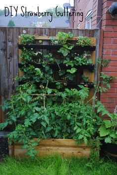 If you want to grow strawberries this year, but don't have a lot of space, try making this DIY Strawberry Gutter - it's quick, easy and cheap to make. Strawberry Planters, Strawberry Garden, Strawberry Fields, Home Garden Design, Home And Garden, Herb Garden, Farm Gardens, Outdoor Gardens, Gardening For Beginners