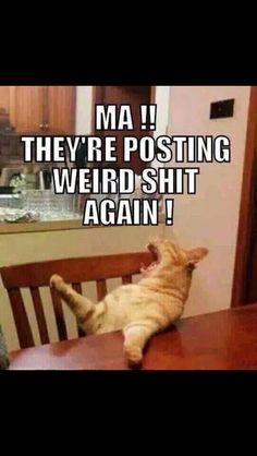 Story of Facebook statuses