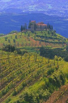 Italy  -  Tuscany Villa Vineyard  This is where you will find me when I retire....Dream Big! ...ah beauty...