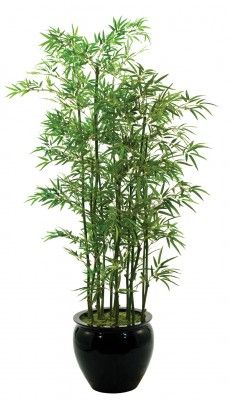 Bamboo#love Bamboo#Rather than meat food, don't look at house without bamboo.
