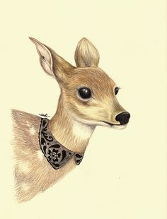 Prismacolor Animals by Indi Maverick, via Behance