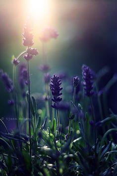 dieuvousbenisse1: Tumblr - lavender