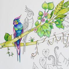 Johanna Basford Instagram - @johannabasford - Oh hello tropical feathers! #MagicalJungle